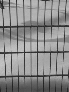 Schattenträume_Auswahl005
